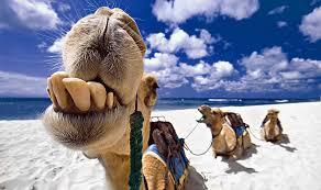 Lanzarote, l'île esthétique Images?q=tbn:ANd9GcRzweJNYJPDoSeJp6wg0hYrJp9R0u8CqWfXcdmNAuVPT8XEu1nEfg