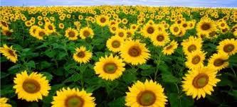 essay on plant growth part i   blog  ultius essay on plant growth part i