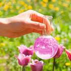 <b>Удобрения для орхидей</b> — купить оптом и в розницу | Цена от ...
