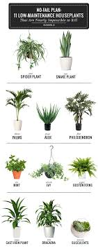 roomplants room plants this infographic and blog break down the simplest plants to have in yo