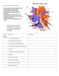 diagram showing the circulatory system of the body circulatory circulatory system diagram for kids humananatomybody info