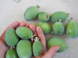 Image result for PINEAPPLE GUAVA
