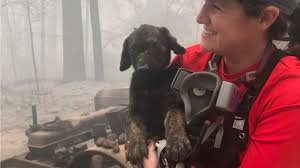 <b>Puppy</b> Temporarily Named Trooper Rescued From Rubble Of ...