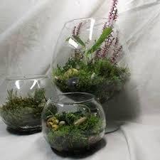 <b>Сухоцветы</b> для флористов. <b>Home Decor</b>