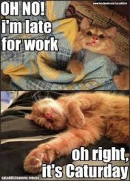 Funny Quotes that make me LOL on Pinterest | Retail, Cat and Ha Ha via Relatably.com