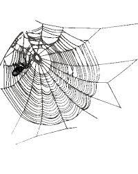 """Résultat de recherche d'images pour """"gifs araignées"""""""