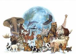 english  essay   protect endangered species essay   protect endangered species