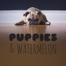 Puppies and Watermelon
