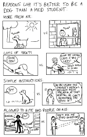 a cartoon guide to becoming a doctor med school vs being a dog med school vs being a dog
