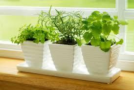 images indoor kitchen herb garden