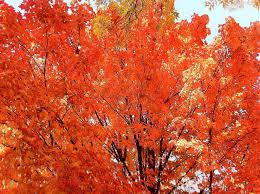 What's the best classical music to listen to in the fall? | Classical MPR