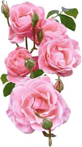 Resultado de imagen para flores para la virgen de lourdes