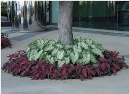 Small Picture 25 best Landscaping around trees ideas on Pinterest Landscape