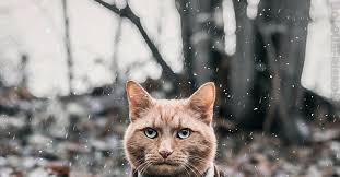 <b>Кот в пальто</b>.