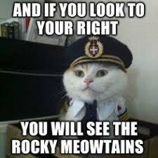 Funny Pets on Pinterest | Biggest Dog, Dog Memes and Cat Memes via Relatably.com