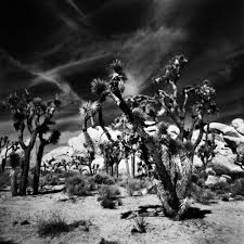 photo essay the joshua tree in vintage film analogue film photo essay the joshua tree in vintage film