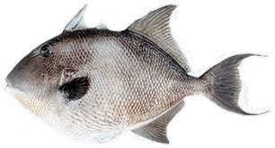 Resultado de imagen de pez