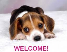 Welcome Regal Beagle! Images?q=tbn:ANd9GcS1A5hH7Tnkr4flDFOAyuyTtUfVt2gZpTB9j3tJOzYo5Wku2g2PGA