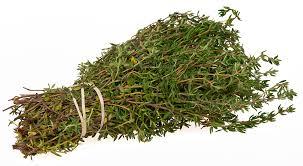 Thyme ( Thymus )