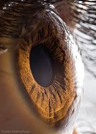 iris humano ,que bello