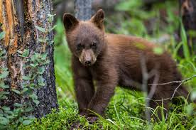 Image result for cute forest animals