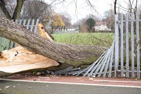 Image result for pics of a tree falling on a fence