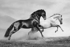 <b>Equestrian</b> Sports <b>Posters</b>, <b>Prints</b>, Paintings & Wall Art for Sale ...
