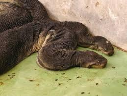 Resultado de imagem para tipo de cobras que habitam a ilha dascobras-brasil