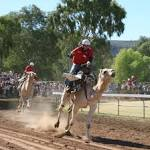 Images & Illustrations of camel racing