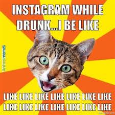 Cat memes – Instagram While Drunk | AnimalMemes.com via Relatably.com