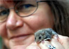 Amanda Boardman, OAM, with one of her little mates, a baby sugar glider. - a09ef97c-209d-4bfc-9c58-991d6a49ecd1