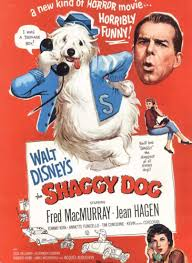 Image result for shaggy dog