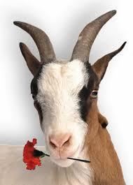 Resultado de imagen de cabras