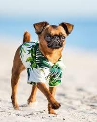 small dog <b>clothes dog</b> sweater dog <b>fashion dog</b> clothes Toulouse ...