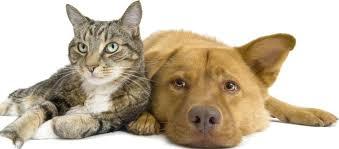 Картинки по запросу фото собак