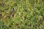 Images & Illustrations of bog moss