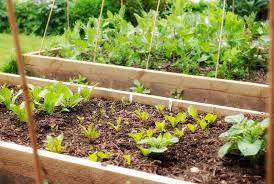 kitchen garden cant