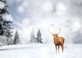 <b>Christmas Deer</b> Stock Photos And Images - 123RF