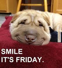 FunnyMemes.com • Dog memes - Smile, it's Friday! via Relatably.com