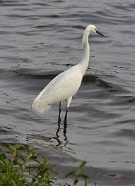 white heron essay a white heron essay