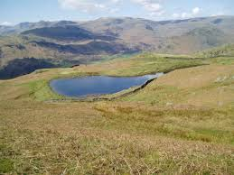 Image result for tarn