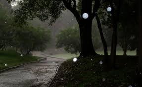 Resultado de imagen de bosques con lluvia