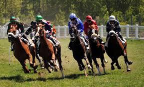 """Résultat de recherche d'images pour """"cheval de course"""""""