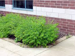 Image result for small shrubs