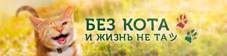 <b>Без кота</b> и <b>жизнь</b> не та ツ | ВКонтакте