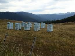 devonport regional gallery portal  8 x 10 dawn murray 1330 beehives in the landscape south preston road