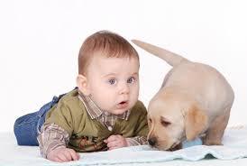 Ο σκύλος ασπίδα στις παιδικές αλλεργίες...