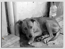 Στην δικαιοσύνη ζευγάρι στην Μεγάλη Βρετανία, επειδή παραμελούσε τους σκύλους του...