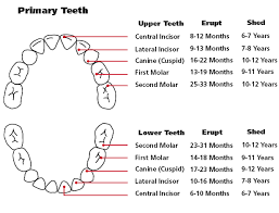 Teething Chart: See When Your Baby's Teeth Will <b>Come In</b>