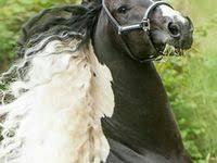 500+ <b>Magnificent Horses</b> ideas in 2020 | horses, beautiful horses ...